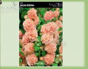 alcea-stockrose-pink-1-pc.jpg