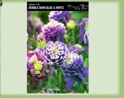 aquilegia-aquilegia-double-dark-blue-white-1-pc-angebot!!!.jpg