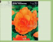 begonia-begonia-doppel-orange-1-pc.jpg