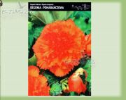 begonia-begonia-gezackten-orange-1-pc.jpg