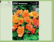 begonia-begonia-non-stop-orange-1-pc.jpg