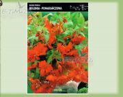 begonia-begonia-pendula-orange-1-pc.jpg