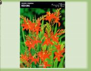 crocosmia-cynobrowka-red-king-5-szt.jpg