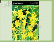 crocosmia-george-davidson-5-pc.jpg