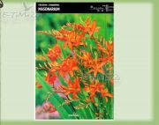 crocosmia-masonarium-5-pc.jpg