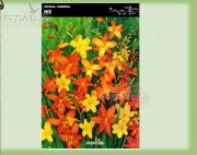 crocosmia-mix-10-pc.jpg