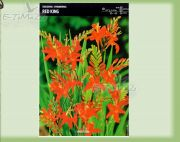 crocosmia-red-king-5-pc.jpg