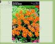 dahlia-dahlie-top-mix-orange-1-pc.jpg