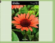 echinacea-echinacea-red-mangus-1-pc-angebot!!!.jpg