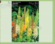eremurus-eremurus-mix-1-pc.jpg