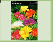 fressia-full-mix-10-stk-angebot!!!.jpg