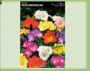 fressia-single-mix-10-stk-angebot!!!.jpg