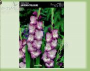 gladiolus-gladiole-hidden-treasure-5-pc.jpg
