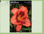 hemerocallis-lilie-daring-deception-1-stk.jpg