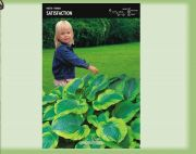hosta-satisfaction-1-stk-angebot!!!.jpg