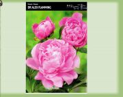 paeonia-pfingstrose-dr-alex-flamming-1-stk-angebot!!!.jpg