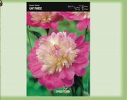 paeonia-pfingstrose-gay-paree-1-stk-angebot!!!.jpg