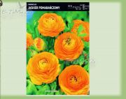 ranunculus-buttercup-orange-5-stk.jpg